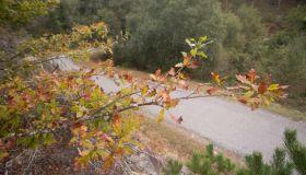 Autumn Starts Tonight At 21:21 Hours